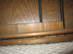 Why would you ever cover up gorgeous inch-and-a-half thick paneling with icky quarter-inch thick plywood?